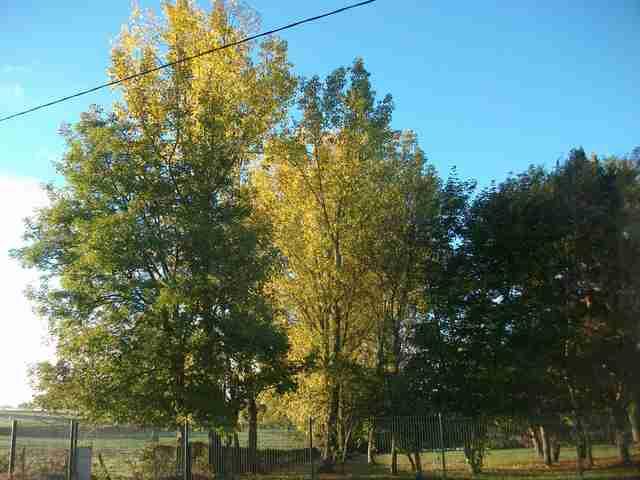 couleurs d'automne Imgp0062