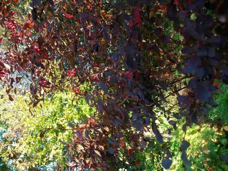 couleurs d'automne Imgp0064