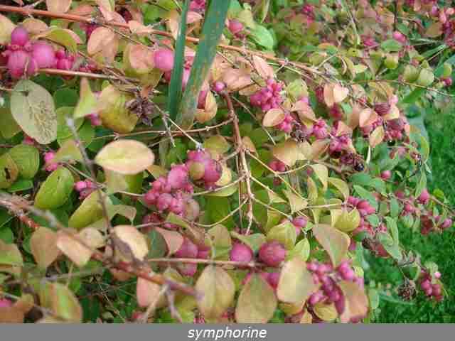couleurs d'automne Imgp0098