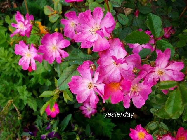 Yesterday Juin_045