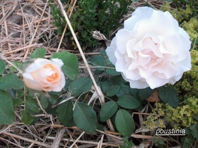 Poustinia Juin_164