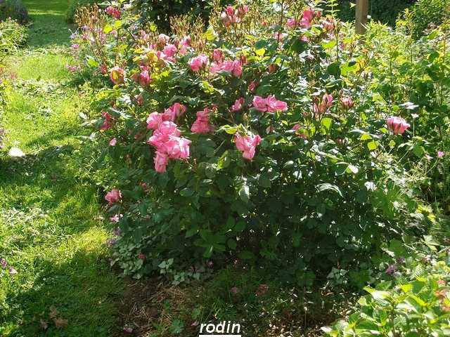 Rodin - Page 3 Mai_0112