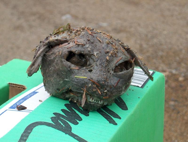 Reconnaitre l'animal par une tête trouvée!!! Hpim0710