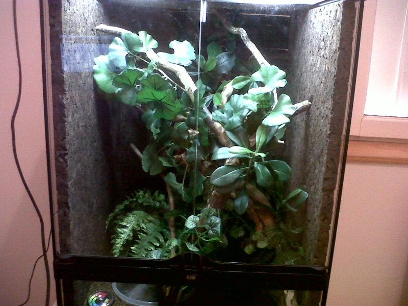 Morelia spilota variegata Img00210