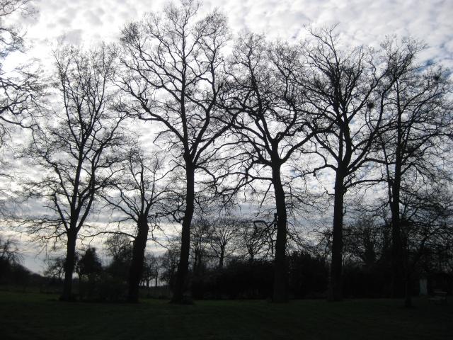 La beauté des arbres... Img_2310