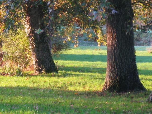 La beauté des arbres... Img_3910