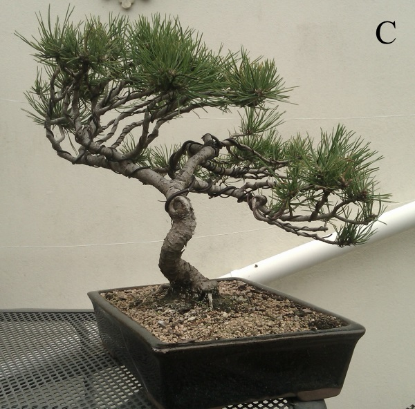 Second serious wiring- Black Pine Black_12