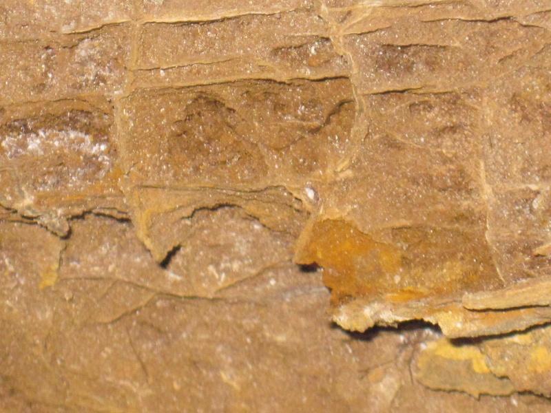 Structures et bois fossiles Cuise_13