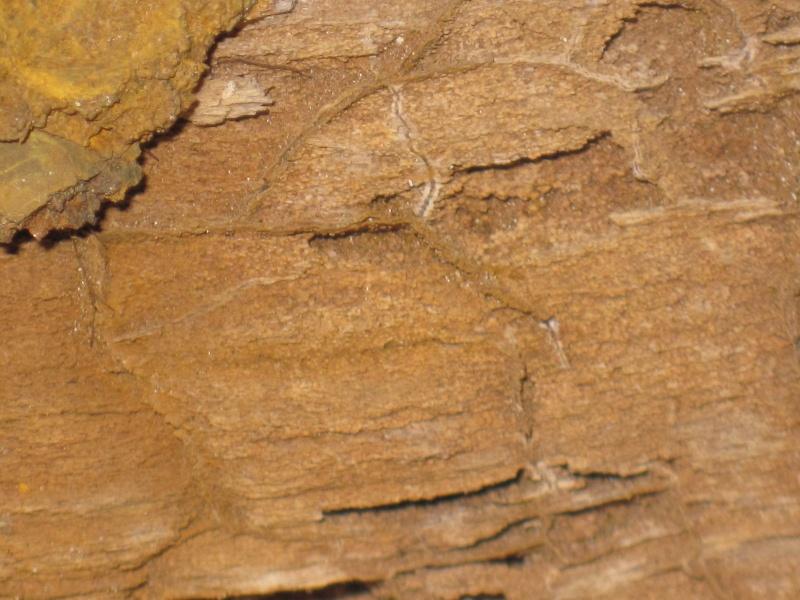 Structures et bois fossiles Cuise_18