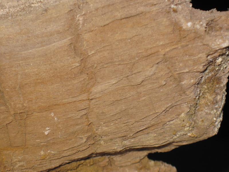 Structures et bois fossiles Cuise_19