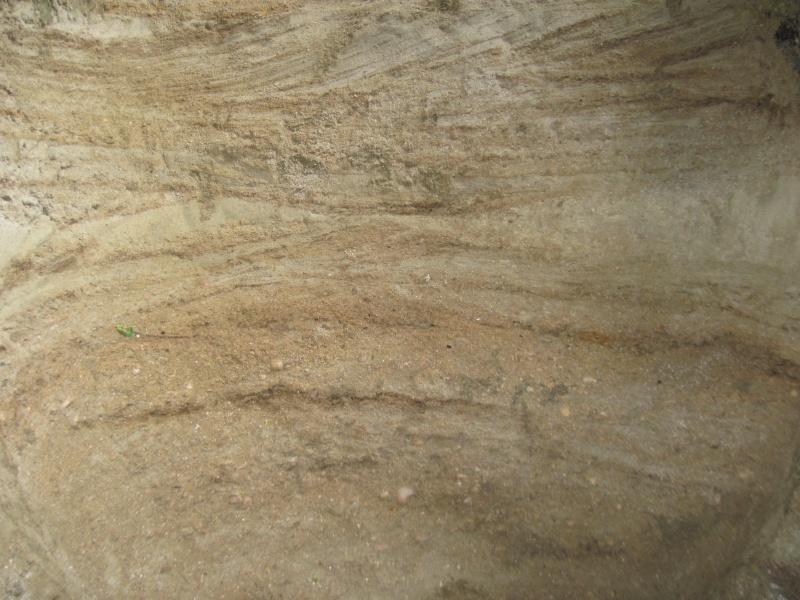 Structures et bois fossiles Cuise_20