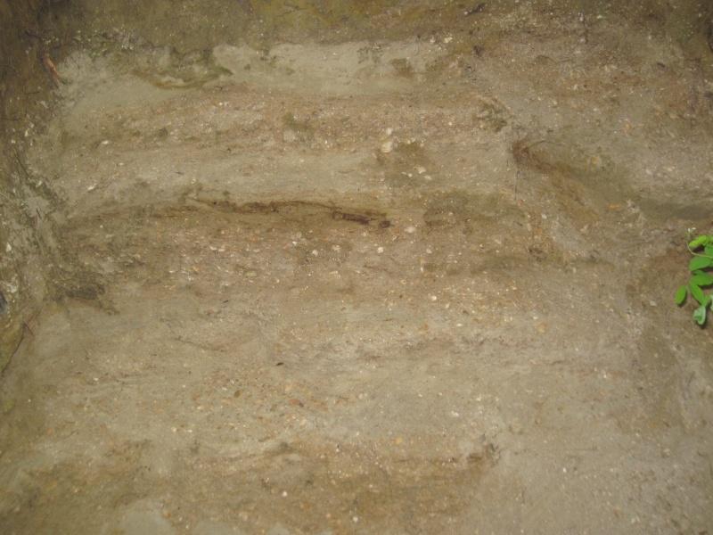 Structures et bois fossiles Cuise_21