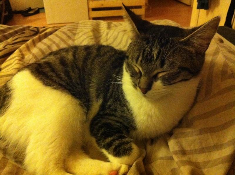 Ivanhoé chaton hyper câlin et attachant né le 9 avril 2013 (adopté par sandrine59 ) - Page 2 Img_1810