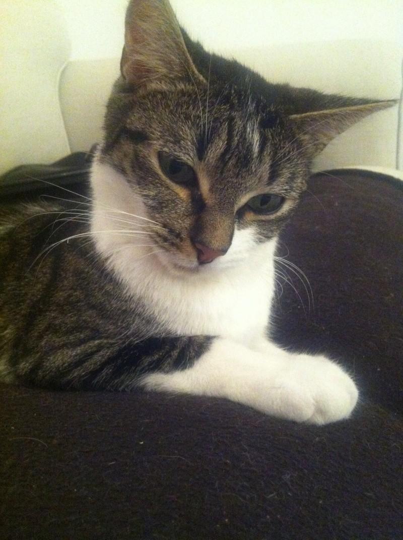 Ivanhoé chaton hyper câlin et attachant né le 9 avril 2013 (adopté par sandrine59 ) - Page 2 Img_2811