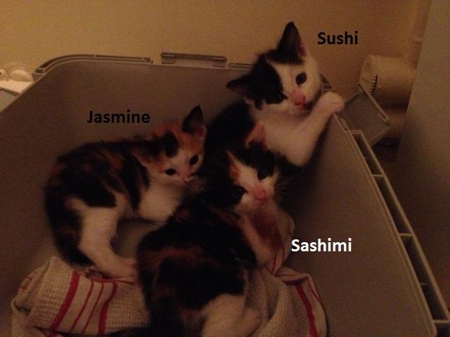 Sushi - Balou Img_5027