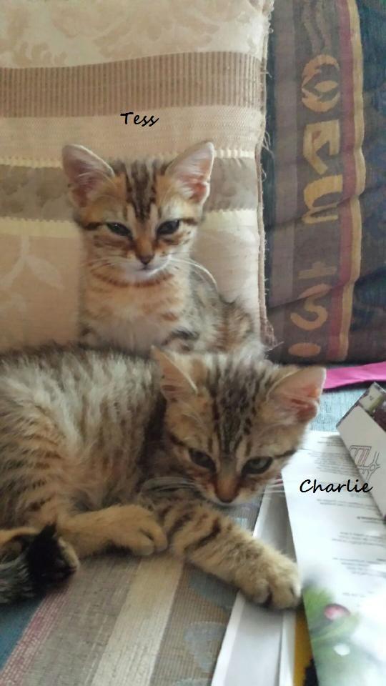 Charlie - Simba Img_5317