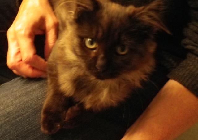 Kitty et Jessy Img_5338