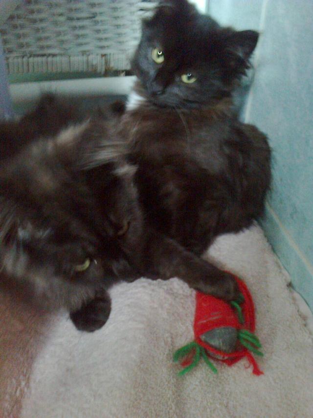 Kitty et Jessy Img_5340
