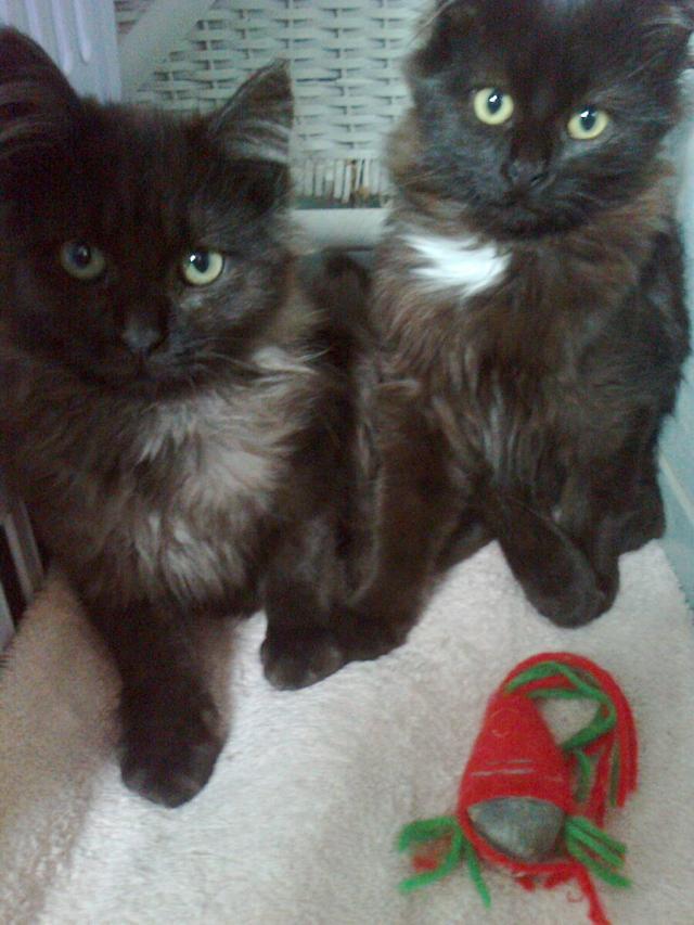 Kitty et Jessy Img_5341