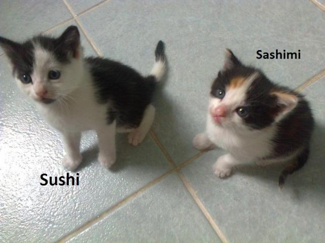 Sushi - Balou Photo174