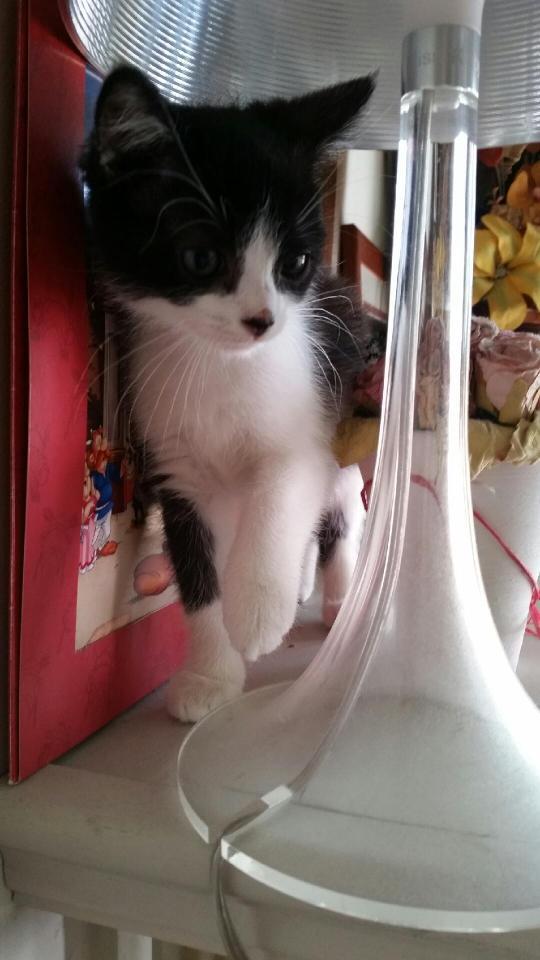 Nikita dit Leeloo Photo229
