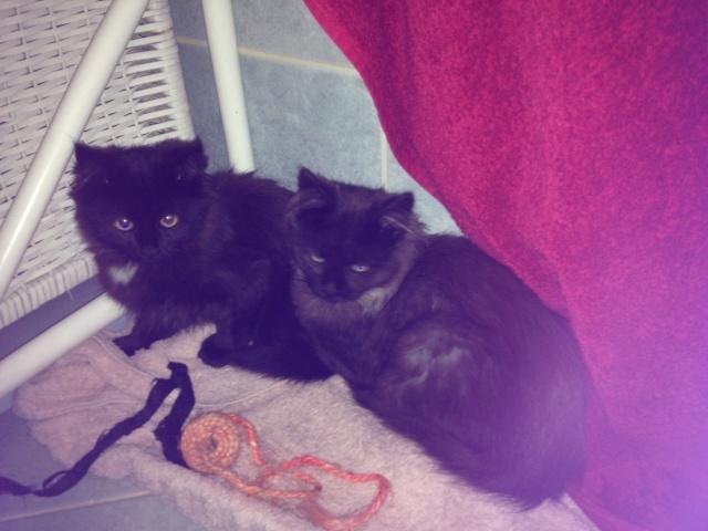 Kitty et Jessy Photo34