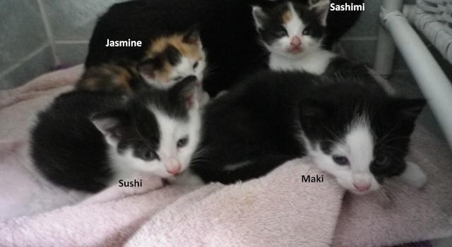 Jasmine - Sashimi Sushis10