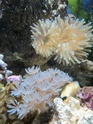 Denerlee marinus 30 Img_3512