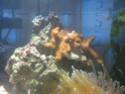 Denerlee marinus 30 Img_3610