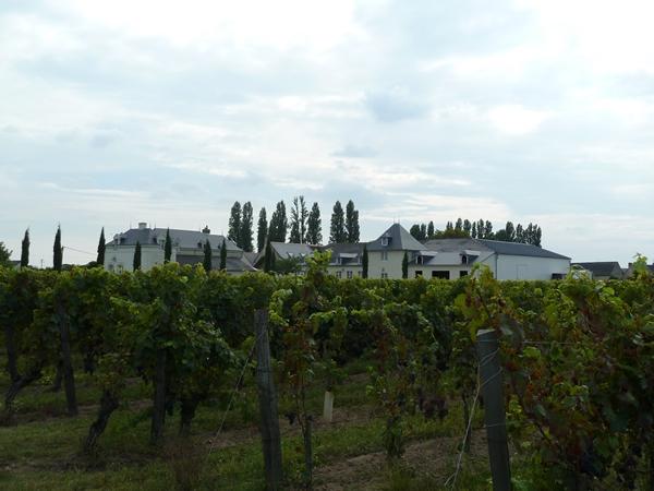Festi Vini 2014  : Vignes vin et randos dans le 49 01912