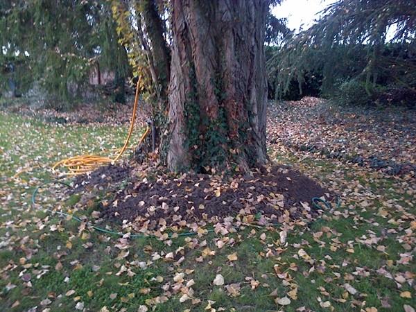 plantes pour dessous d'arbre Img-2027