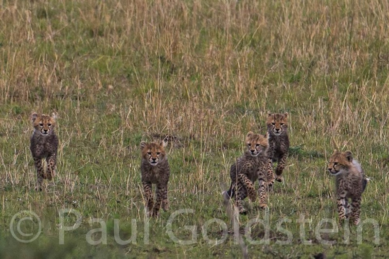 Malaika Cubs10