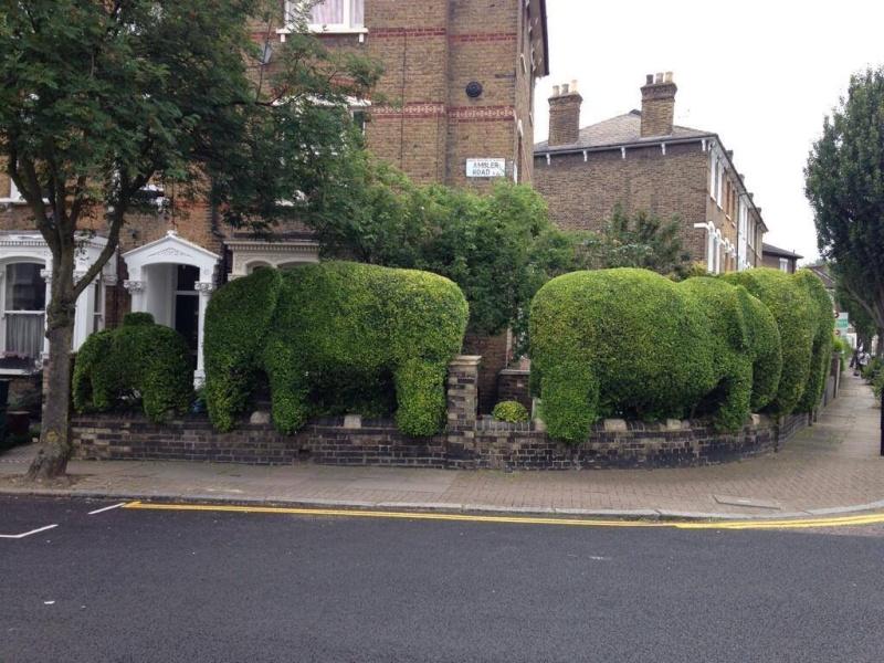 Amazing Hedge Hedge10