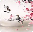 Joyeux anniversaire Kaya Oiseau10