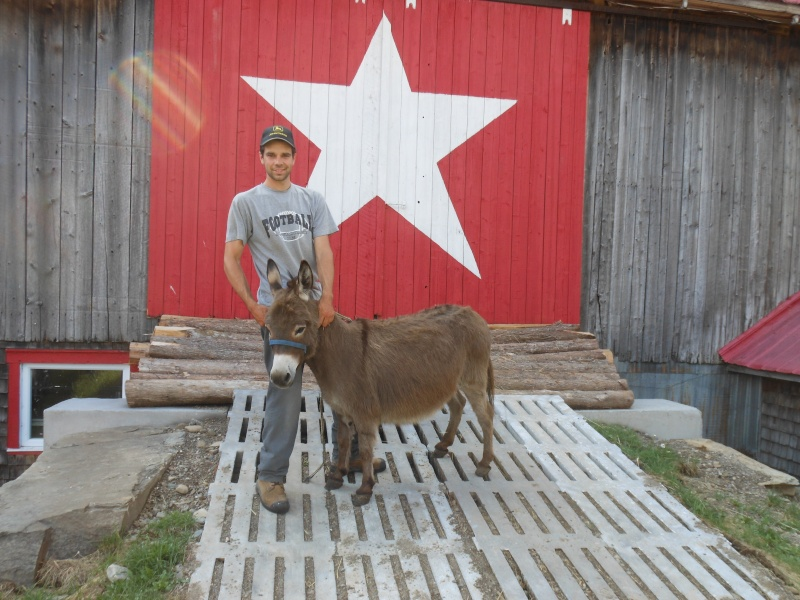 Lama ou alpaga lequel choisir Dscn1210
