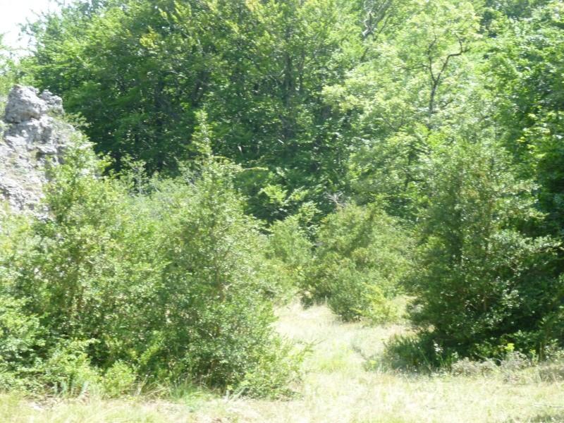 Terrain de 60 ha sur le Larzac P1040013