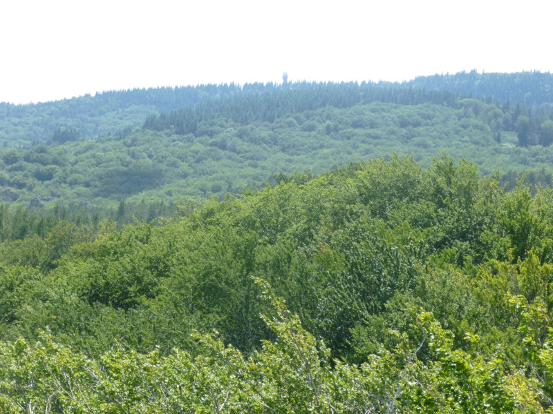 Terrain de 60 ha sur le Larzac P1040015