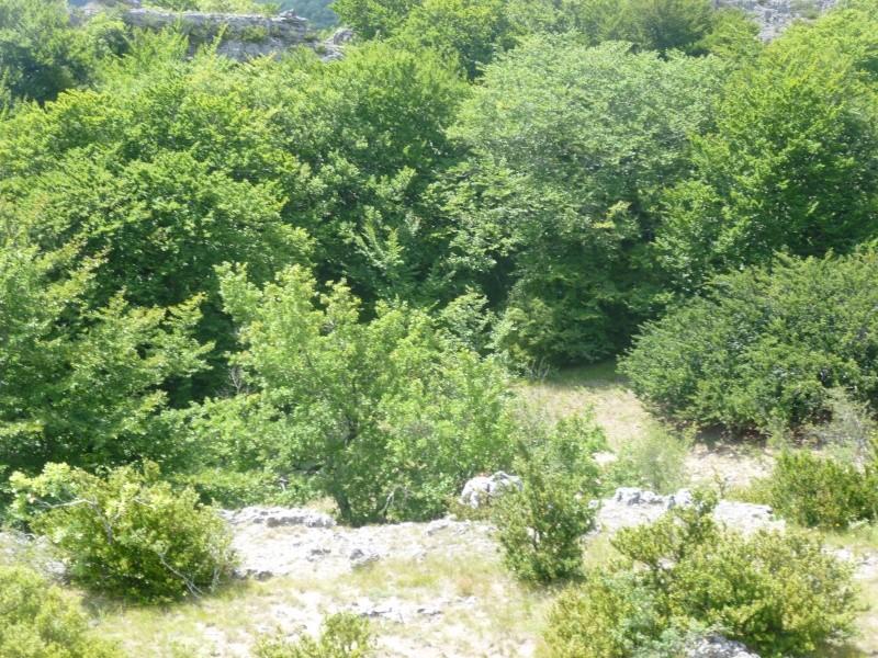 Terrain de 60 ha sur le Larzac P1040017