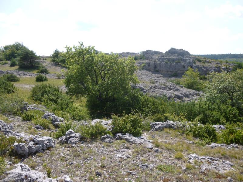 Terrain de 60 ha sur le Larzac P1040021