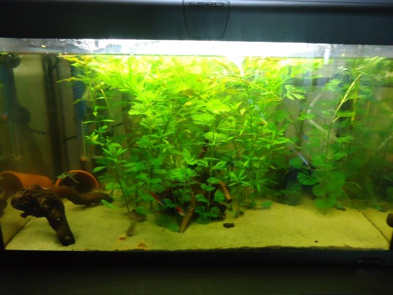 Biotope Amazonien ? Photo_16