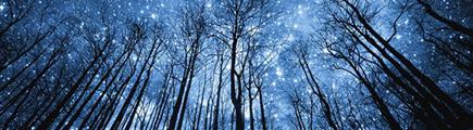Forêt alentour