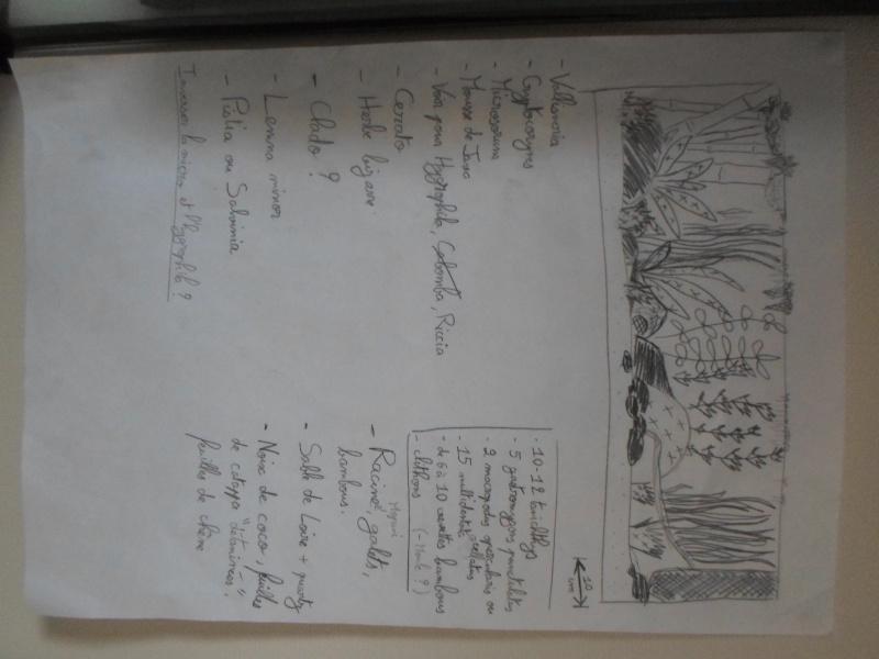 Mon bac fluviatile asiatique (120l) Plan11