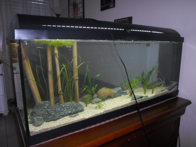 Mon bac fluviatile asiatique (120l) Sam_0910