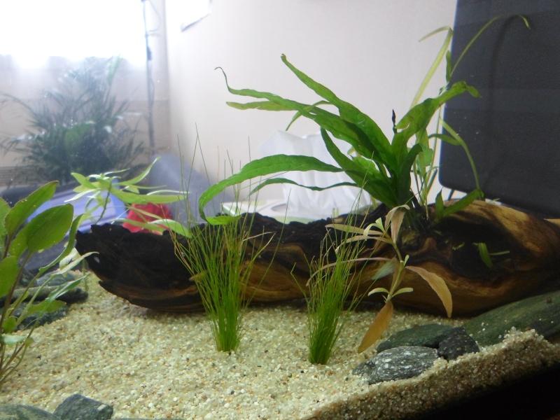 Mon bac fluviatile asiatique (120l) Sam_0914