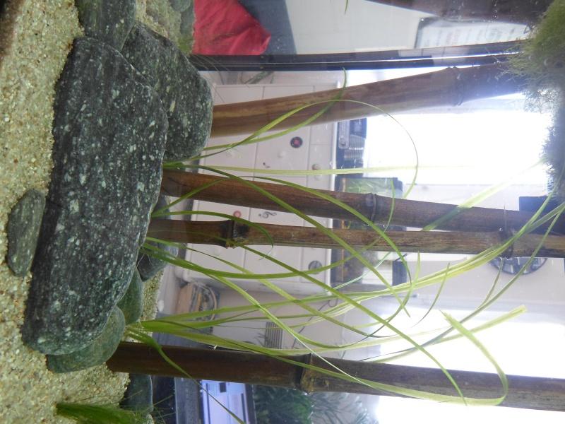 Mon bac fluviatile asiatique (120l) Sam_0915