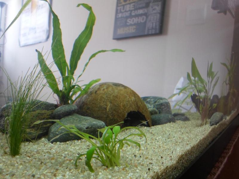 Mon bac fluviatile asiatique (120l) Sam_0916