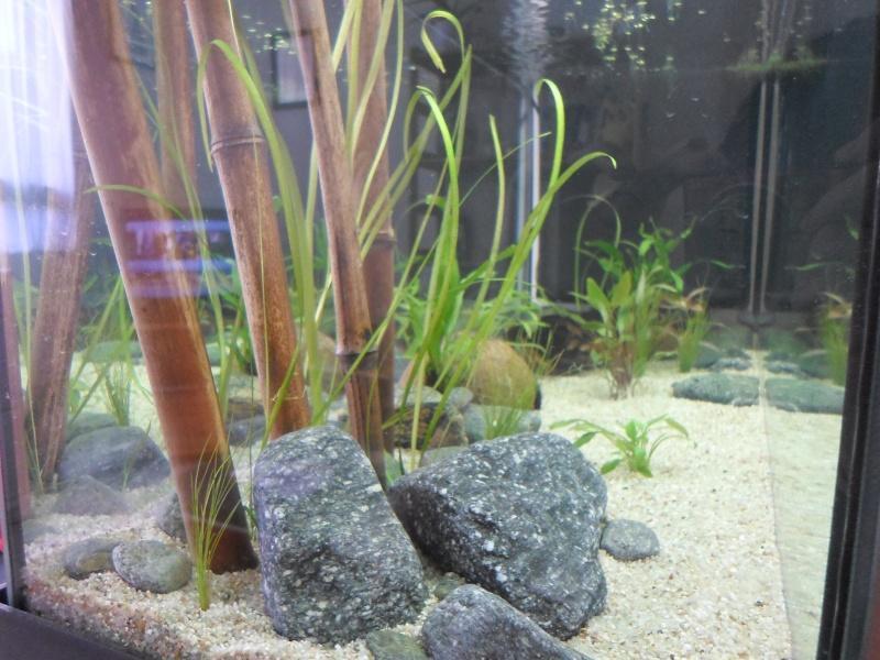 Mon bac fluviatile asiatique (120l) Sam_0917