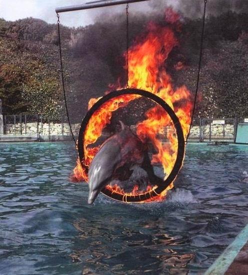 La question des parcs aquatiques Image_39