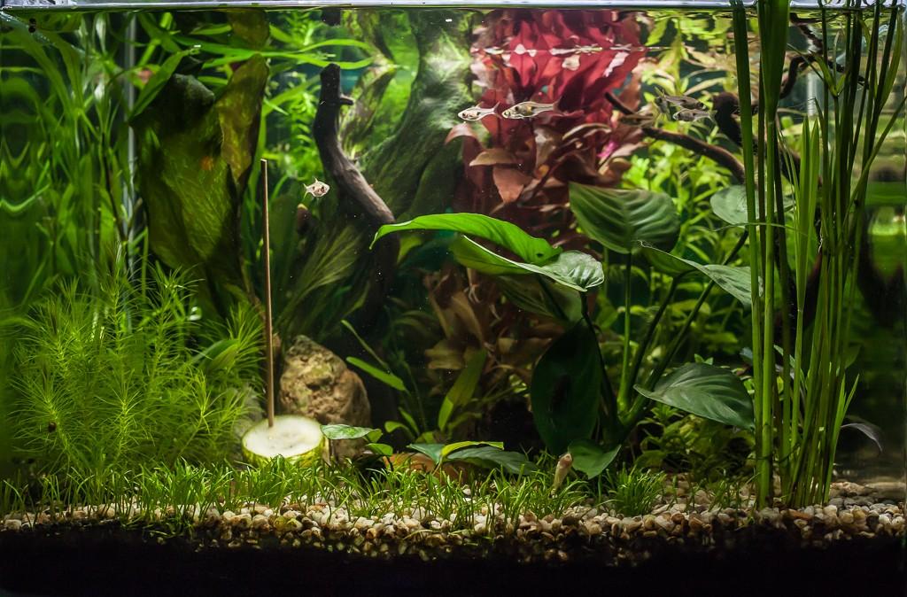 Mon Scaper's Tank 50L non-Aquascaping  :)) Img_2411