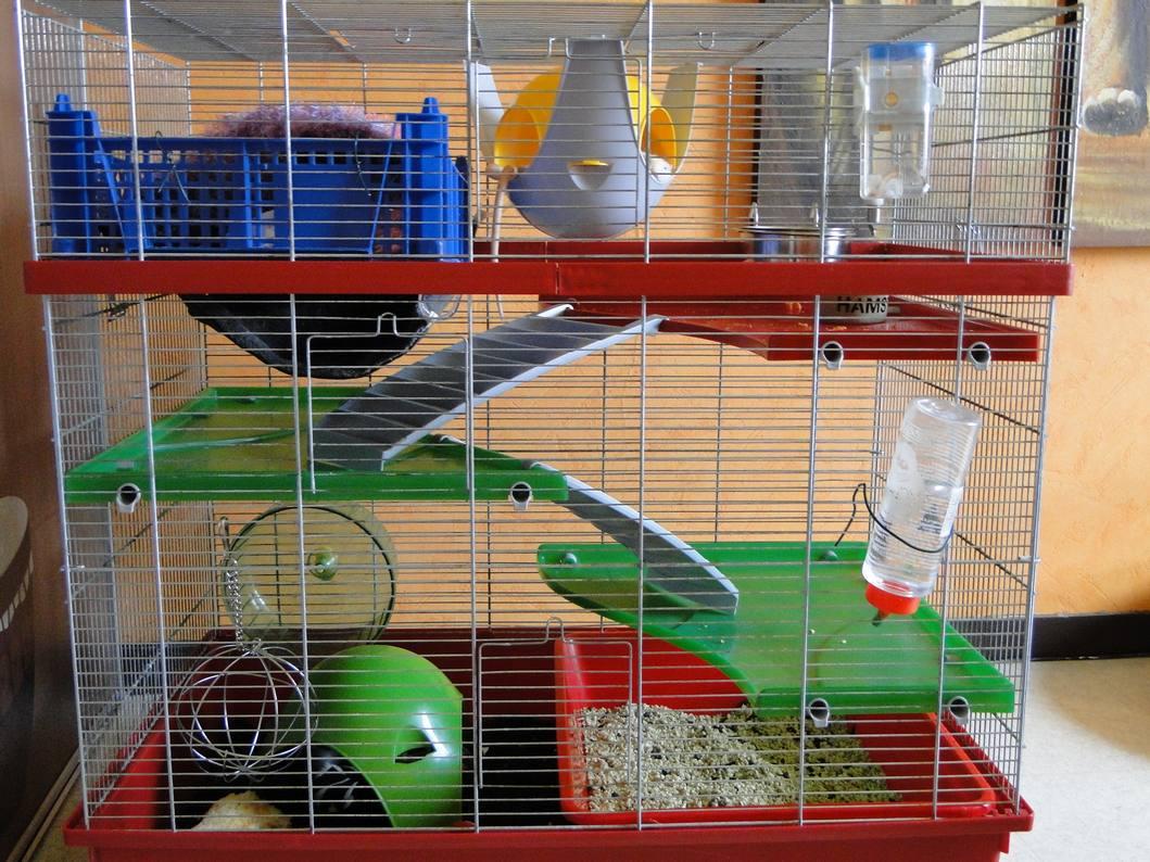 Photos de vos cages - Page 2 Dsc04421